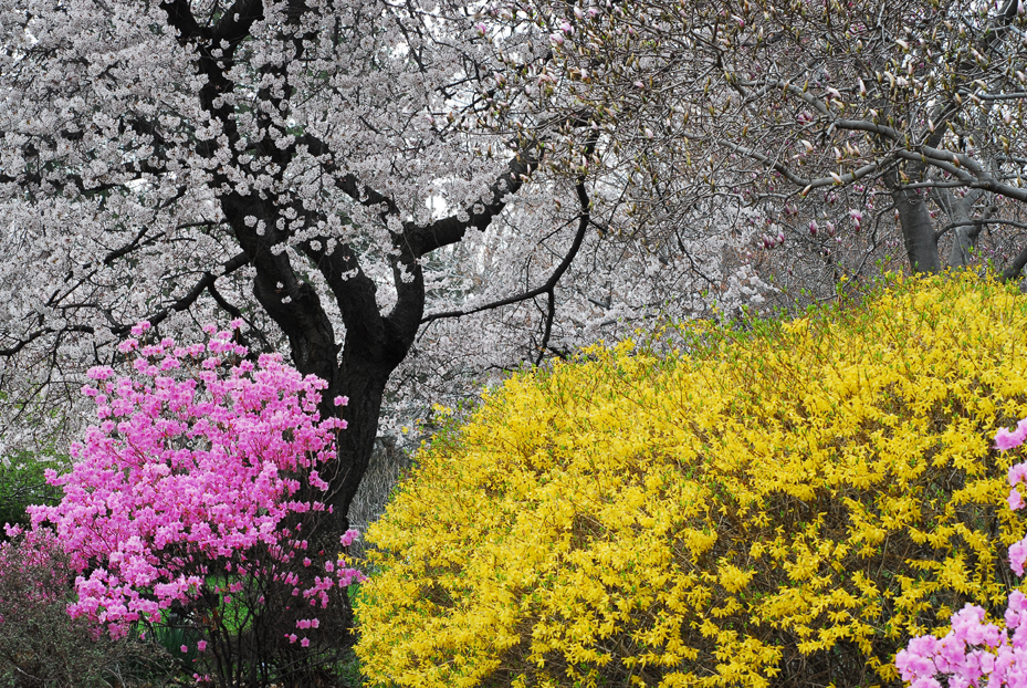 Photography Of Kurt Shaffer Photographs Flowers Trees And