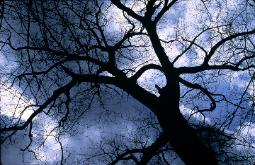 photograph of a bare tree dramatically silhouetted against a stormy sky