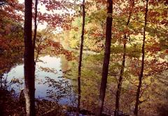 Photo through fall colored trees onto pond with other trees reflected