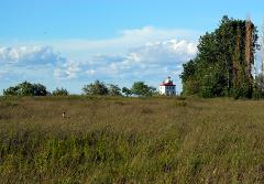 White tail deer in a vast grassy field on the shores of Lake Erie in the Mentor Headlands State Park with lighthouse in the background.