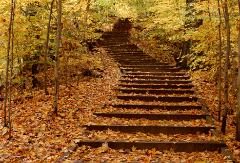 winding stairs through yellow autumn forest hill