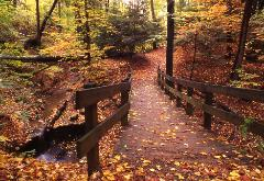 photogarph of a beautiful fall woodland scene looking down a wooden bridge in northeast Ohio