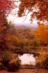 Photo looking out over a pond through red fall trees out over The Cuyahoga Valley National Park, Ohio
