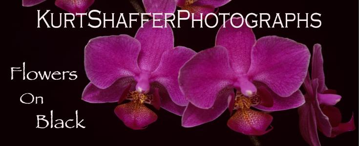 Photography of Kurt Shaffer Photographs Flowers on Black