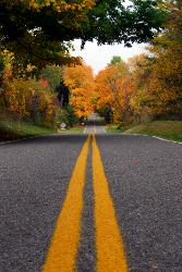 Photograph taken in the middle of a rural road with freshly painted double yellow lines with brilliant yellow autumn colored trees.