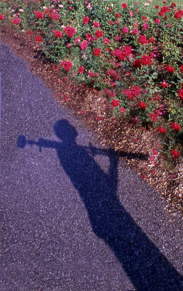 Kurt Shaffer Photographs self-portrait photo of my shadow gazing at roses