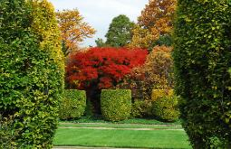Front gardens of Cleveland, Ohio's Rockefeller Park City Greenhouse with red japanese maple tree in center