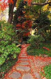 Red Japanese Maple leaves line the path through Rockefeller Park Greenhouse grounds in Cleveland, Ohio