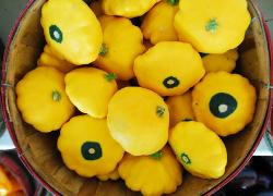 photos of Market basket of yellow patty pan squash