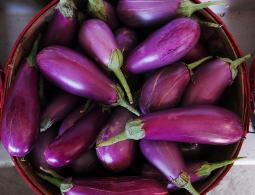 Market basket of purple eggplant