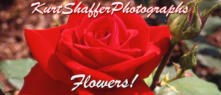 Photography Of Kurt Shaffer Photographs Flowers Trees And Mushroom Photos
