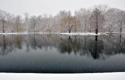 peaceful winter snowy photograph of a pond and trees