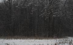 photograph of a quiet seren winter forest scene in Ohio with snow falling
