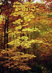 yellow and red leaves in autumn forest