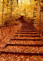Photo of a long stairway up a hill through yellow and gold fall trees